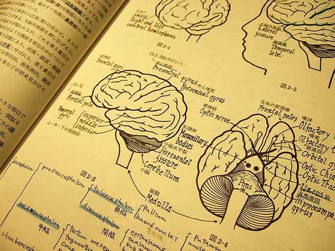 緊張時の体の状態とメカニズム