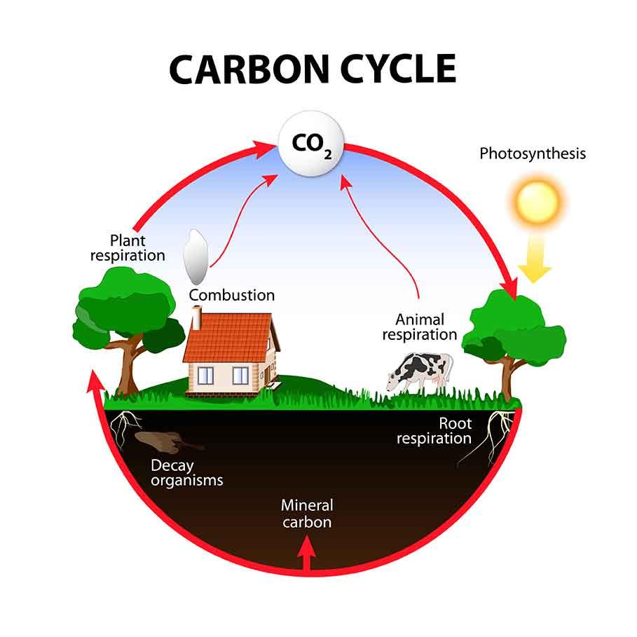 放射線炭素年代測定法