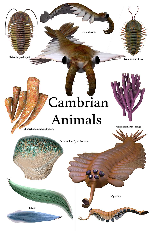 カンブリア紀の生物