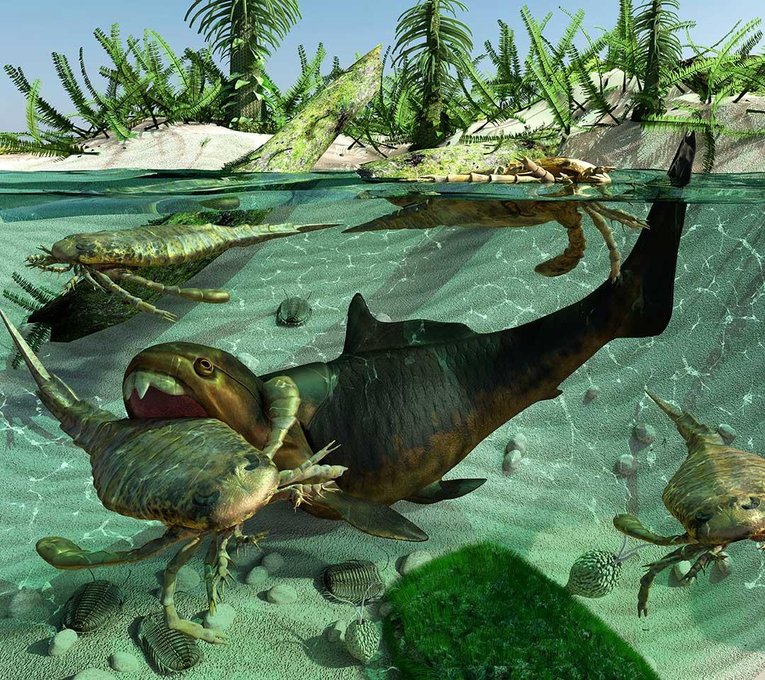 カンブリア紀の生物の特徴